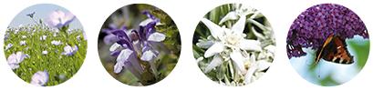 Extraits naturels de plantes